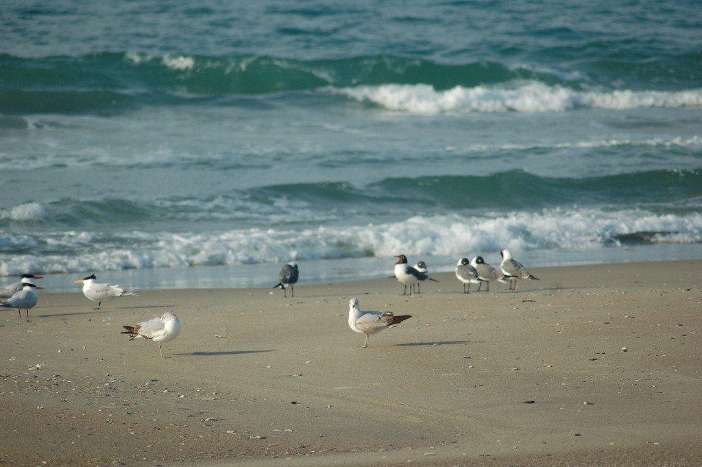 beach_gulls and waves