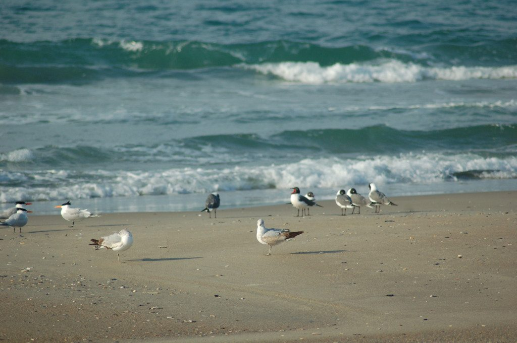 beach_gulls and waves